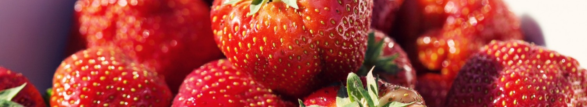 بهترین نوع بوته توت فرنگی چهارفصل کدام است ؟