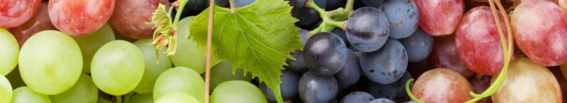 کاشت نهال انگور