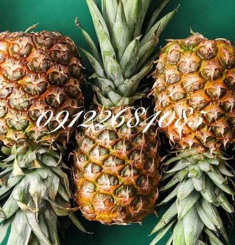نهال آناناس (نهالستان جلیلی)