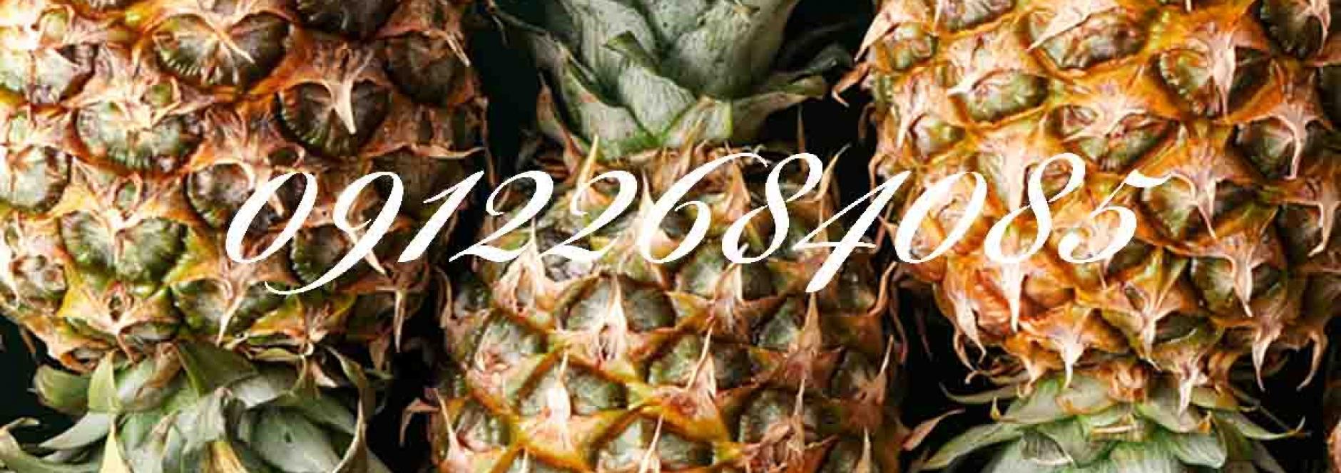 آناناس (نهالستان جلیلی)