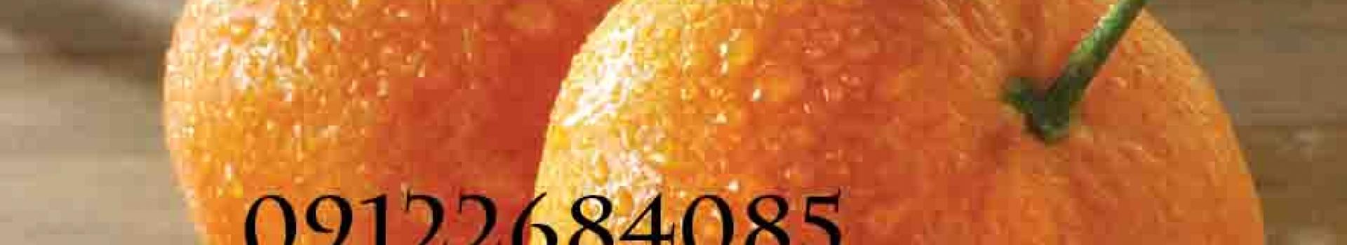 نهال نارنگی (نهالستان جلیلی)