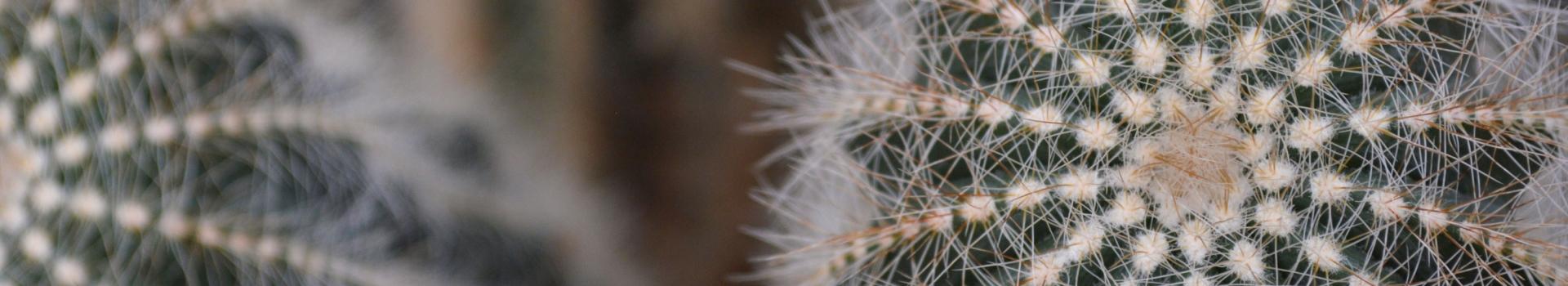 گیاه کاکتوس